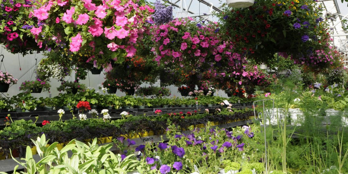 annuals: greenhouse