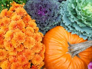fall cabbage, mums, and pumpkin