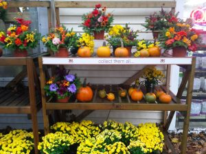 fall assortment of pumpkins and flowers